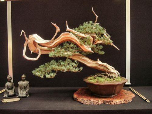 Top 50 cây cảnh bonsai dáng đẹp và nghệ thuật nhất thế giới