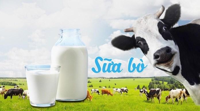 Sữa bò và những sản phẩm từ sữa bò kích thích tuyến bã nhờn tiết nhiều dầu1