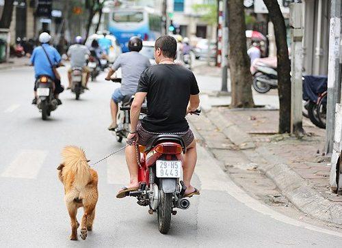 Dắt chó đi dạo trên đường bằng xe máy sẽ bị xử phạt 200.000 đồng