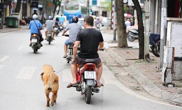 Dắt chó đi dạo bằng xe máy sẽ bị xử phạt 200.000 ngàn đồng1